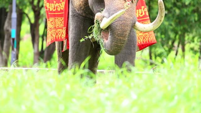 Elefant äta