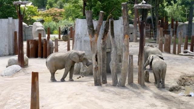 elephant family in captivity/ Basel Zoo
