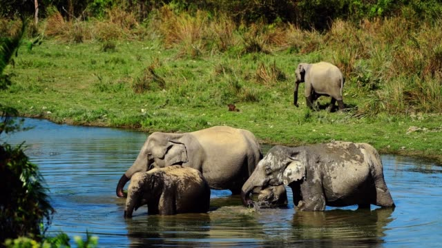elephant family in river - safari animals stock videos & royalty-free footage