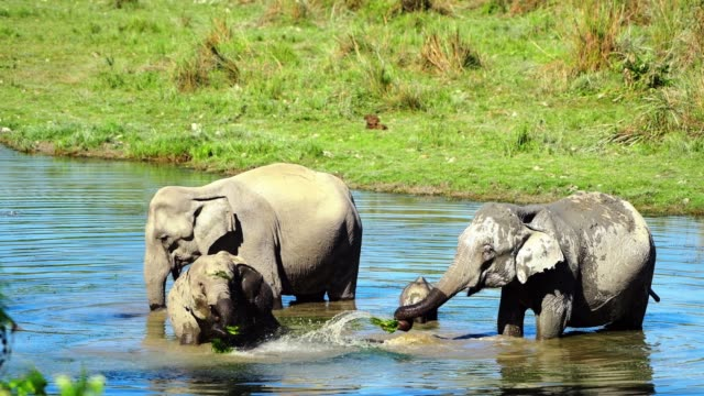 elephant family in river - elephant stock videos & royalty-free footage