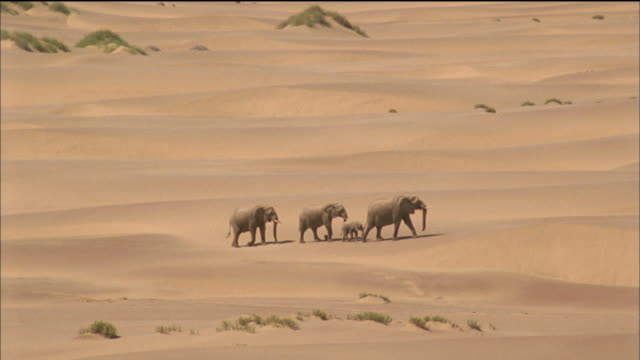 elephant family walk through desert available in hd. - namibia stock videos & royalty-free footage
