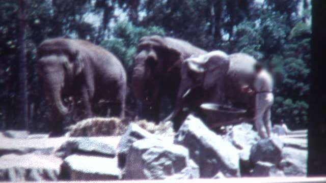 Elefante alimentação década de 1960