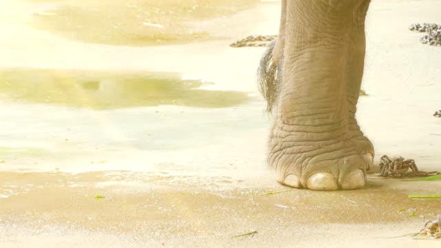 vídeos de stock, filmes e b-roll de elefante pés - pata com garras