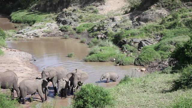 vidéos et rushes de elephant group riverbed - animaux à l'état sauvage