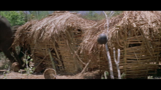 ms pan elephant herd crushing bamboo hut - letterbox format stock videos & royalty-free footage
