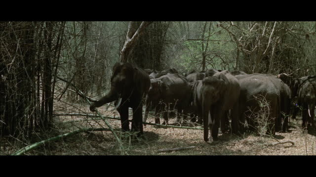 ms elephant herd standing in jungle - medium group of animals stock videos & royalty-free footage