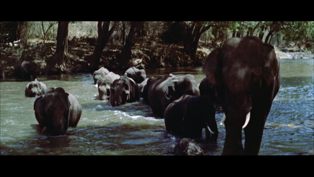 ms pan  elephant herd walking into stream - レターボックス点の映像素材/bロール