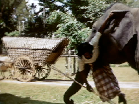 1939 ms elephant holding trainer in mouth while balancing on two legs/ sri lanka  - arbeitstier stock-videos und b-roll-filmmaterial