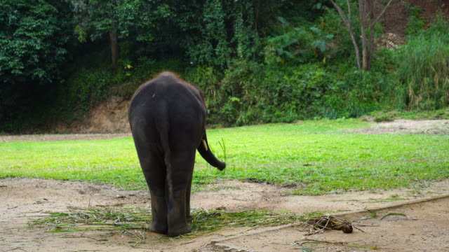 elephant in farm at Chiang Mai, Thailand