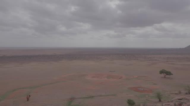 elephant / kenya, africa - arid stock videos & royalty-free footage