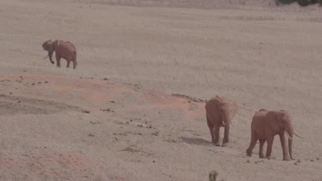 vidéos et rushes de elephant / kenya, africa - plaque de montage fixe