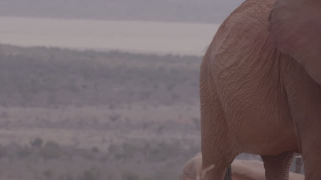 elephant / kenya, africa - named wilderness area stock videos & royalty-free footage