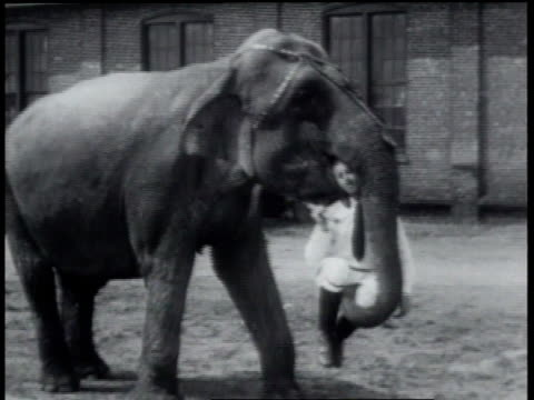 1931 ws elephant lifting and walking with trainer - 1931 stock videos & royalty-free footage