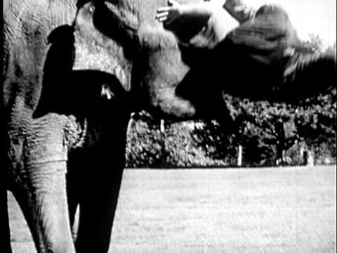vidéos et rushes de b/w montage 1940 elephant lifting boy (11-12) up onto its back and sliding down off elephant / usa - elephant
