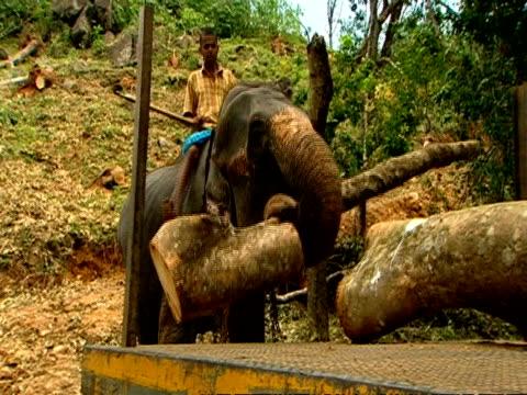 vidéos et rushes de ms elephant loading logs on a lorry - carrying