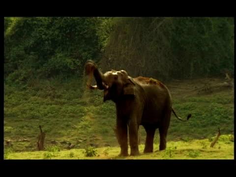 Elephant (Elephas maximus) mud-bathing, Nagarahole, Southern India