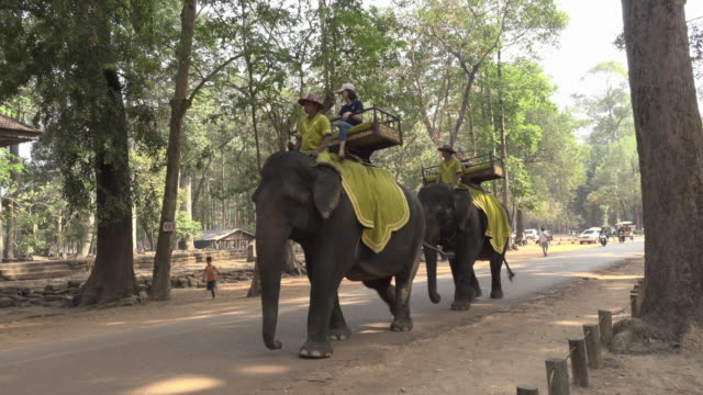 a elephant ride at angkor thom - 人力車点の映像素材/bロール