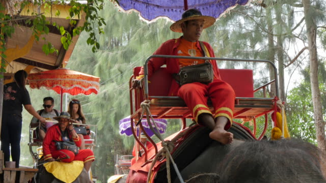elephant rides, bangkok, thailand, southeast asia, asia - thailand stock-videos und b-roll-filmmaterial