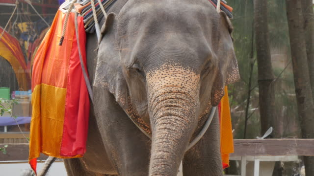 Elephant rides, Bangkok, Thailand, Southeast Asia, Asia