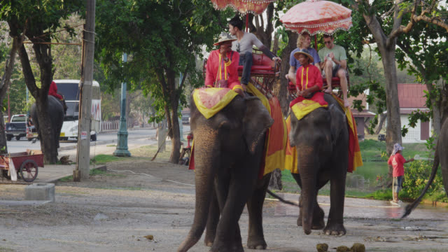 elephant rides - タイ王国点の映像素材/bロール