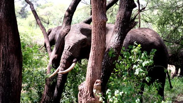 Elephant Scratching