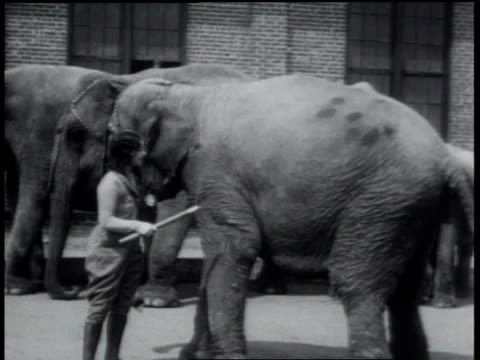 1931 ws elephant shaking as trainer pokes him with stick - 1931 stock videos & royalty-free footage
