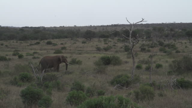 elephant / south africa, southern africa, africa - southern africa stock videos & royalty-free footage