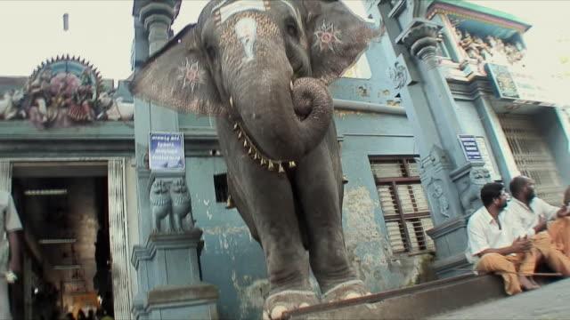 ms la elephant standing on street, pondicherry, india - animal welfare stock videos and b-roll footage