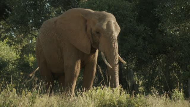 Elephant Static