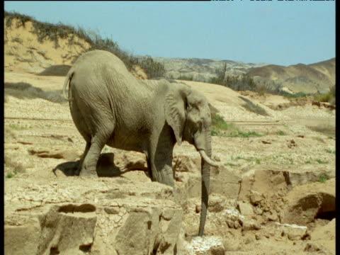 vídeos de stock, filmes e b-roll de elephant strains to clamber down from rocky ledge - peitoril de janela