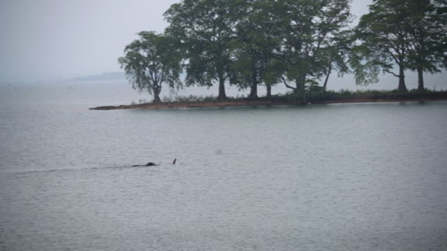 ms elephant swimming,crossing river,sri lanka - sri lanka stock videos & royalty-free footage
