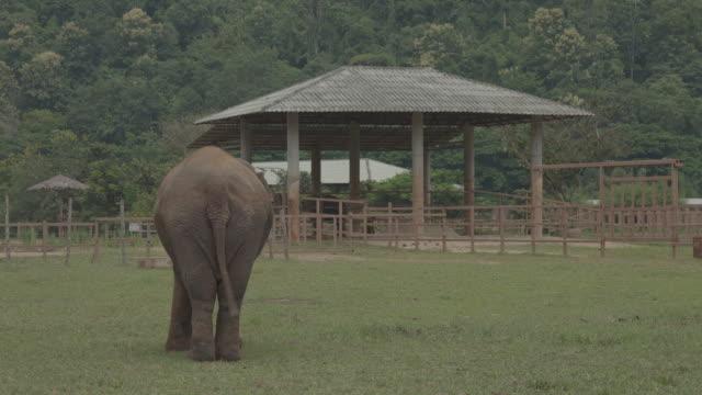vídeos de stock, filmes e b-roll de elephant / thailand - cauda