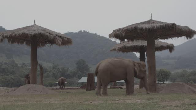 vidéos et rushes de elephant / thailand - plaque de montage fixe