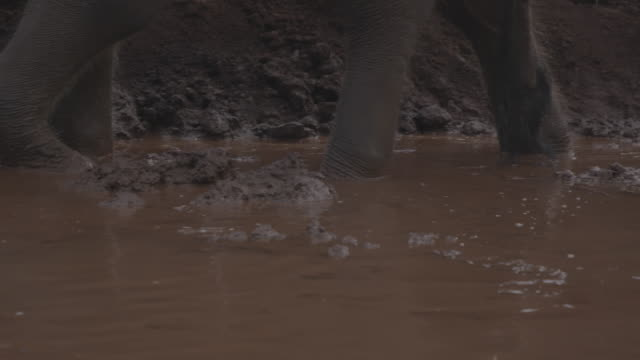 elephant / thailand - walking in water stock videos & royalty-free footage