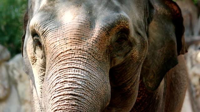 elephant - herbivorous stock videos & royalty-free footage