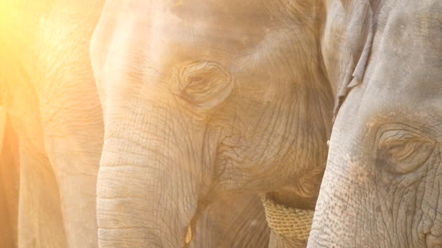 elephant - animal nose stock videos & royalty-free footage
