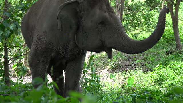 elephant - elephant stock videos & royalty-free footage