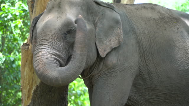 vidéos et rushes de éléphant - elephant