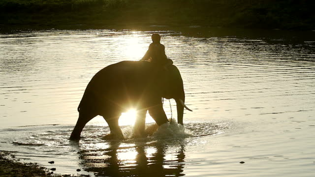 vídeos de stock e filmes b-roll de elephant walking in the river with silhouette sunlight. - cultura tailandesa