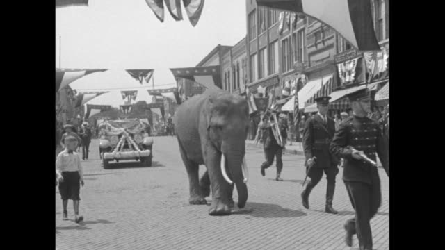 vídeos de stock, filmes e b-roll de elephant with banner over its back standing in front of crowd / overhead shot of band marching down street in parade, crowd watching / elephant... - 1920 1929