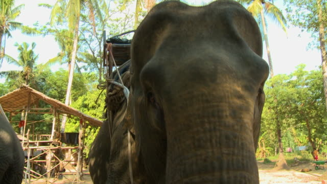elephant with saddle - lobe stock videos & royalty-free footage