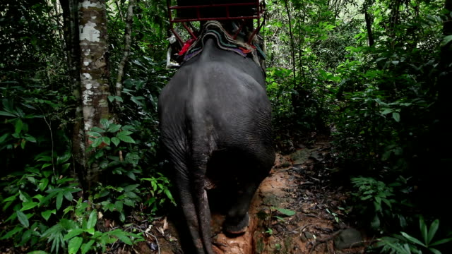 elephant with tourists breaking through the jungle. - trat province stock videos and b-roll footage