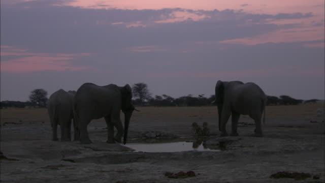 elephants and lioness drinking from the waterhole of okavango delta - ボツワナ点の映像素材/bロール