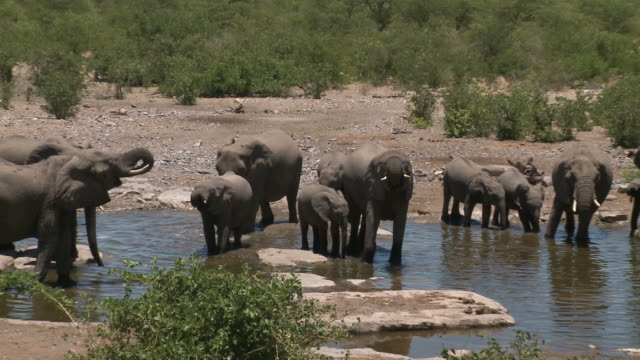 Elephants at a waterhole in Namibia