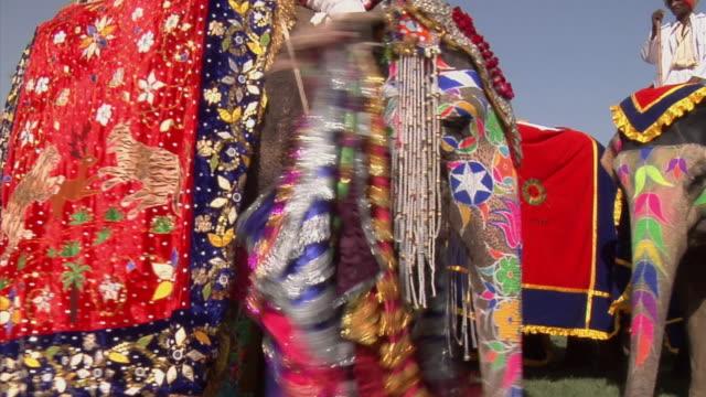 CU, Elephants (Elephas maximus) at annual elephant festival, Jaipur,Rajasthan, India