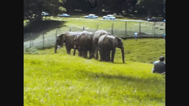 elephants at the zoo, 4k digitized footage - animal family stock videos & royalty-free footage