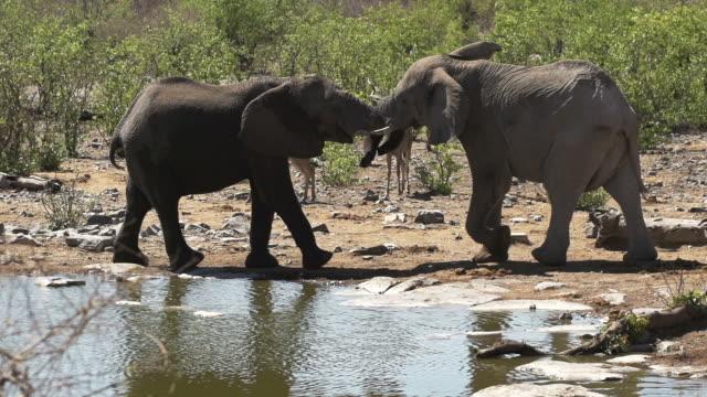 elephants at waterhole in slow motion - waterhole stock videos & royalty-free footage