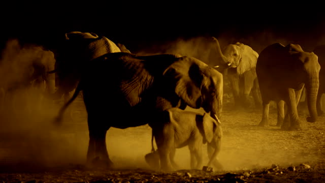 elephants at waterhole - elephant stock videos & royalty-free footage