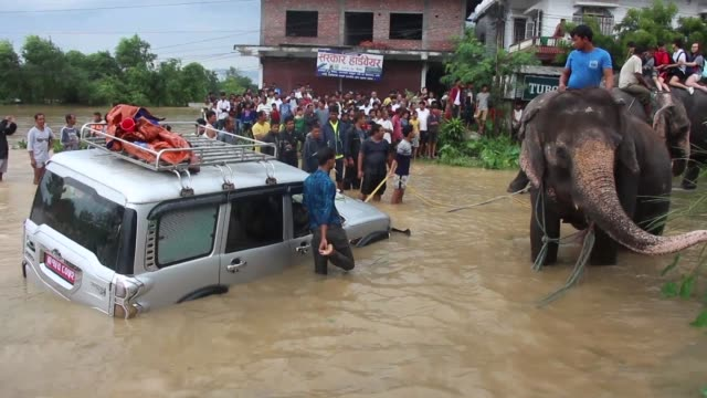 Elephants came to the rescue of a group of tourists in Nepal's Chitwan National Park on Sunday as the nation struggles to deal with heavy flooding...