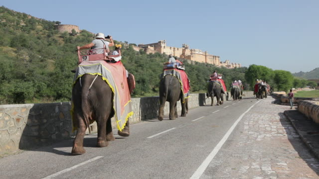 Elephants carry tourists to Amber Fort near Jaipur, India.